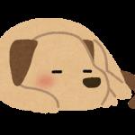 ペット寝姿